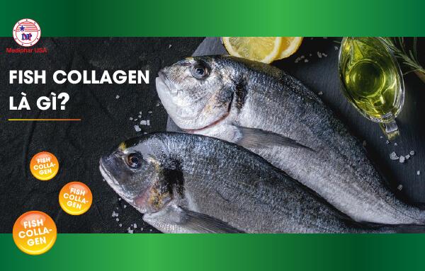 Fish Collagen là gì?