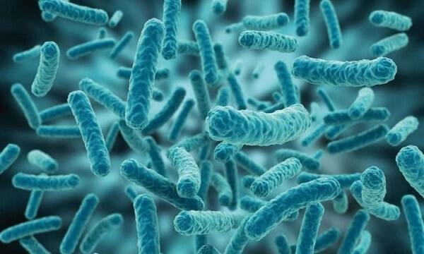 vi khuẩn lactic
